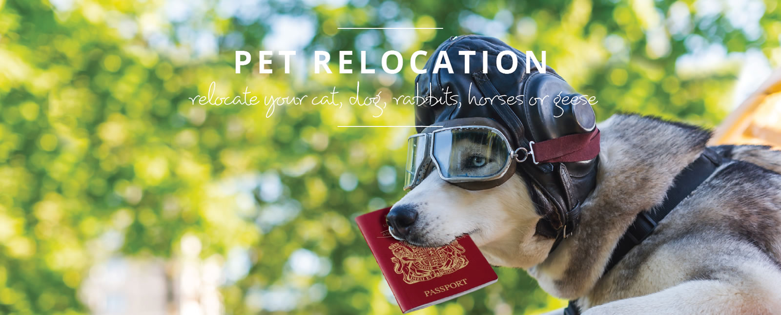 Pet Relocation Service